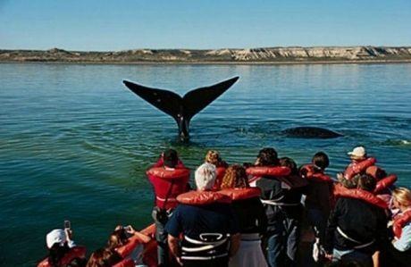 ¿Qué lugar de Argentina hay que visitar para ver las ballenas?