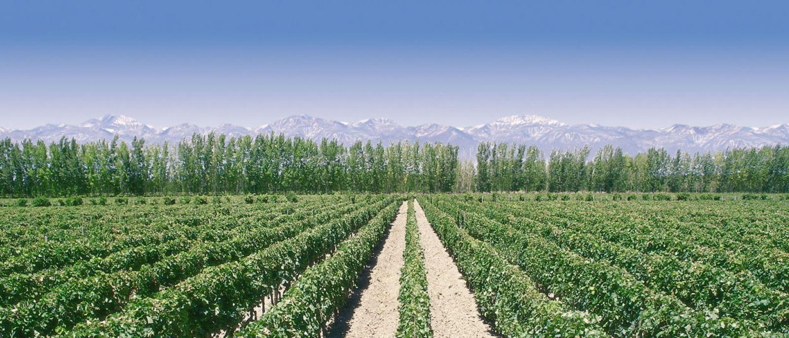 ¿Qué variedades de vino son emblemáticas en Argentina?