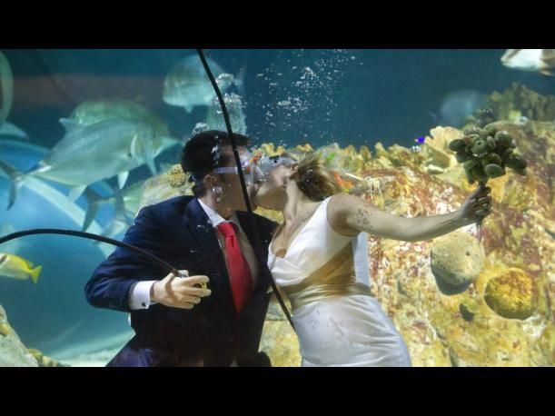 Una mujer se casa con el tiburón más viejo de un acuario australiano