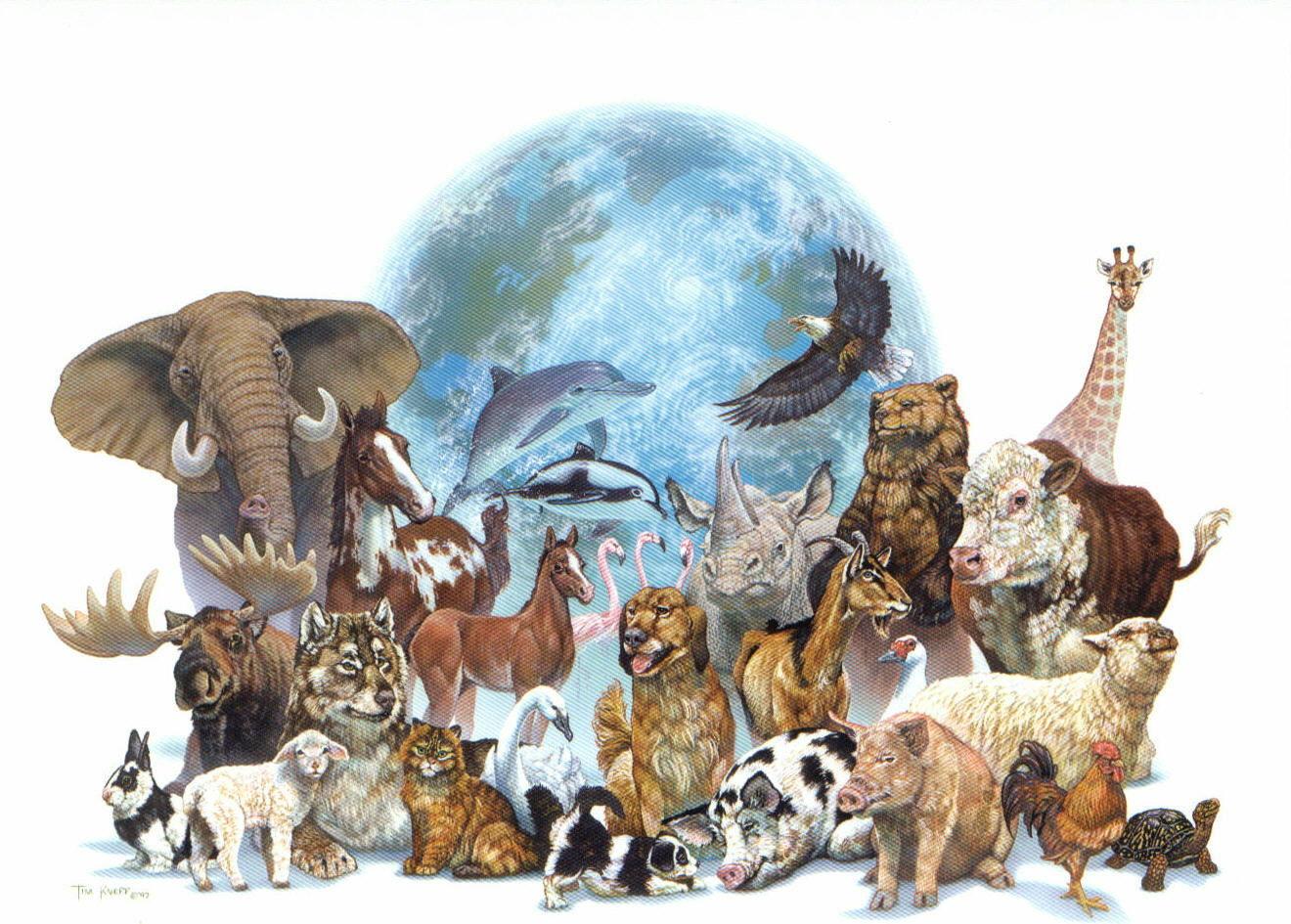 ¿Con qué animales te identificas más?