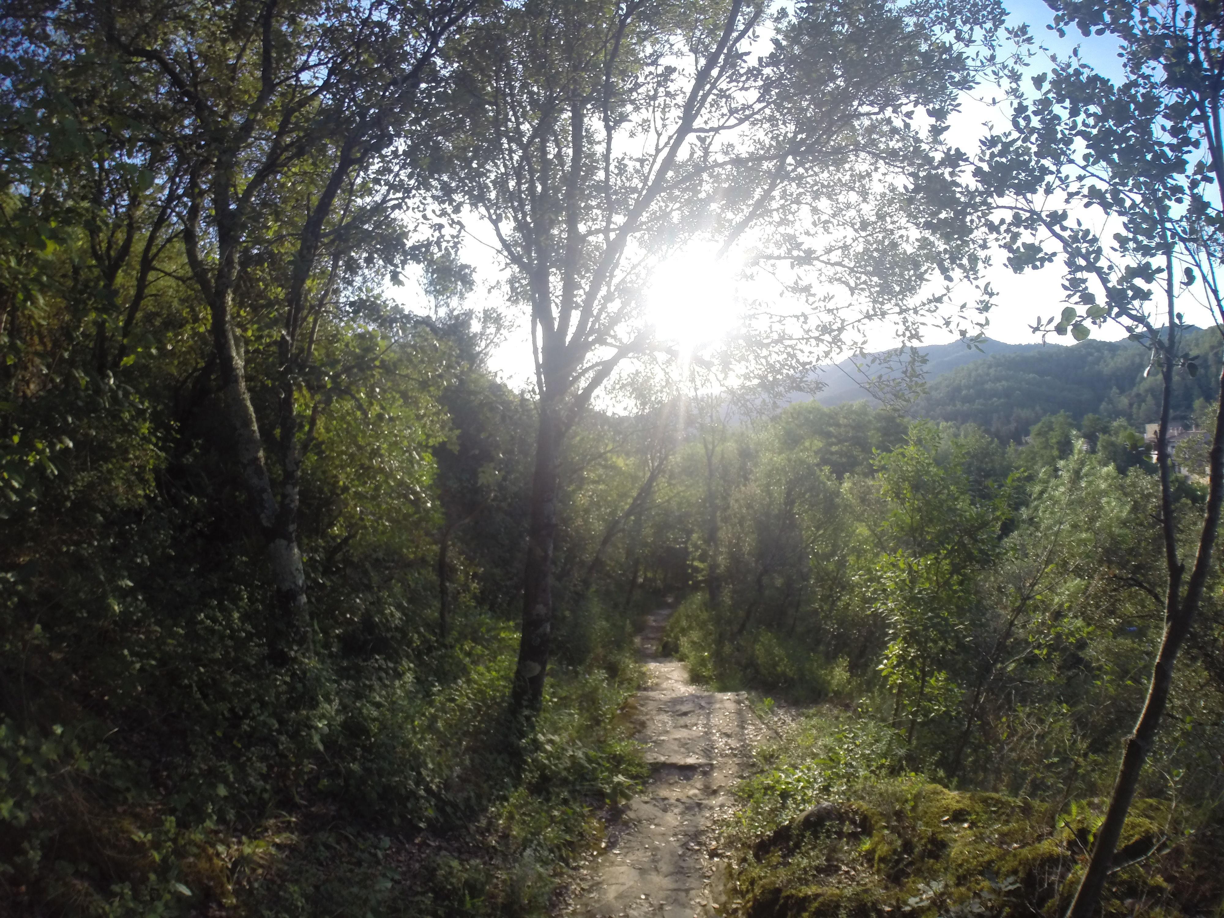 ¿Te gusta la naturaleza?