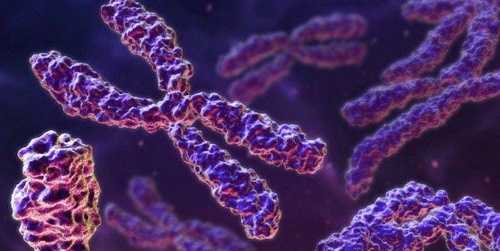 ¿En qué año se creó el primer cromosoma humano sintético?