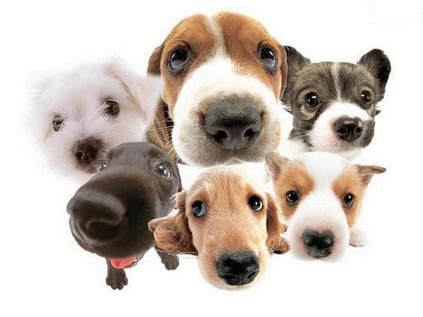 Elige una raza de perro