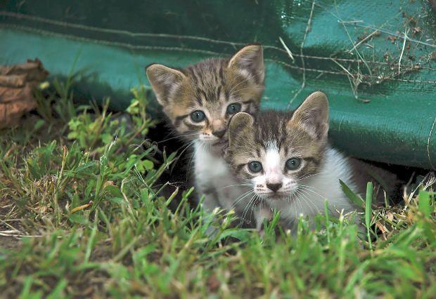 De camino a tu casa, ves varias crías de gato tiradas en el suelo, maullando, a la intemperie con cara de sufrimiento
