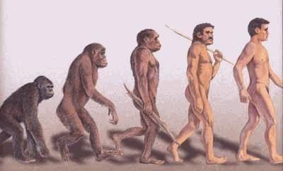 ¿Cuál de los siguiente hominidos tiene un cerebro más grande?