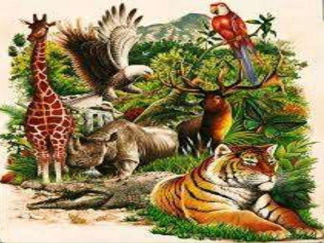 8366 - ¿Sabes cuál es el animal nacional de los países? Parte II
