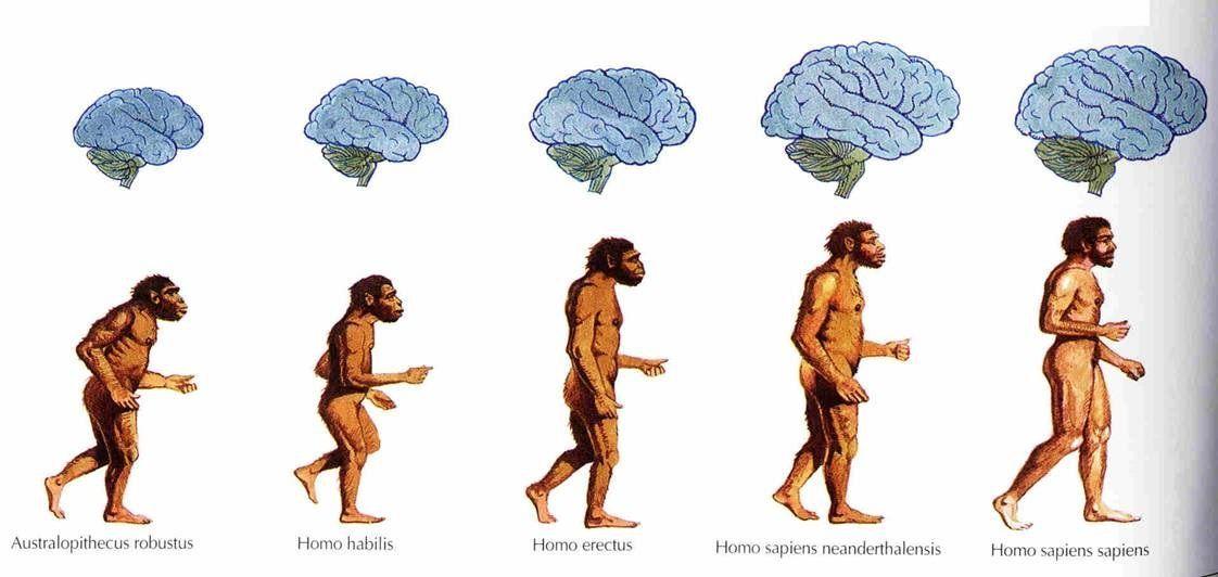 ¿Estás de acuerdo en que los seres humanos somos animales y en que estamos emparentados con los monos?