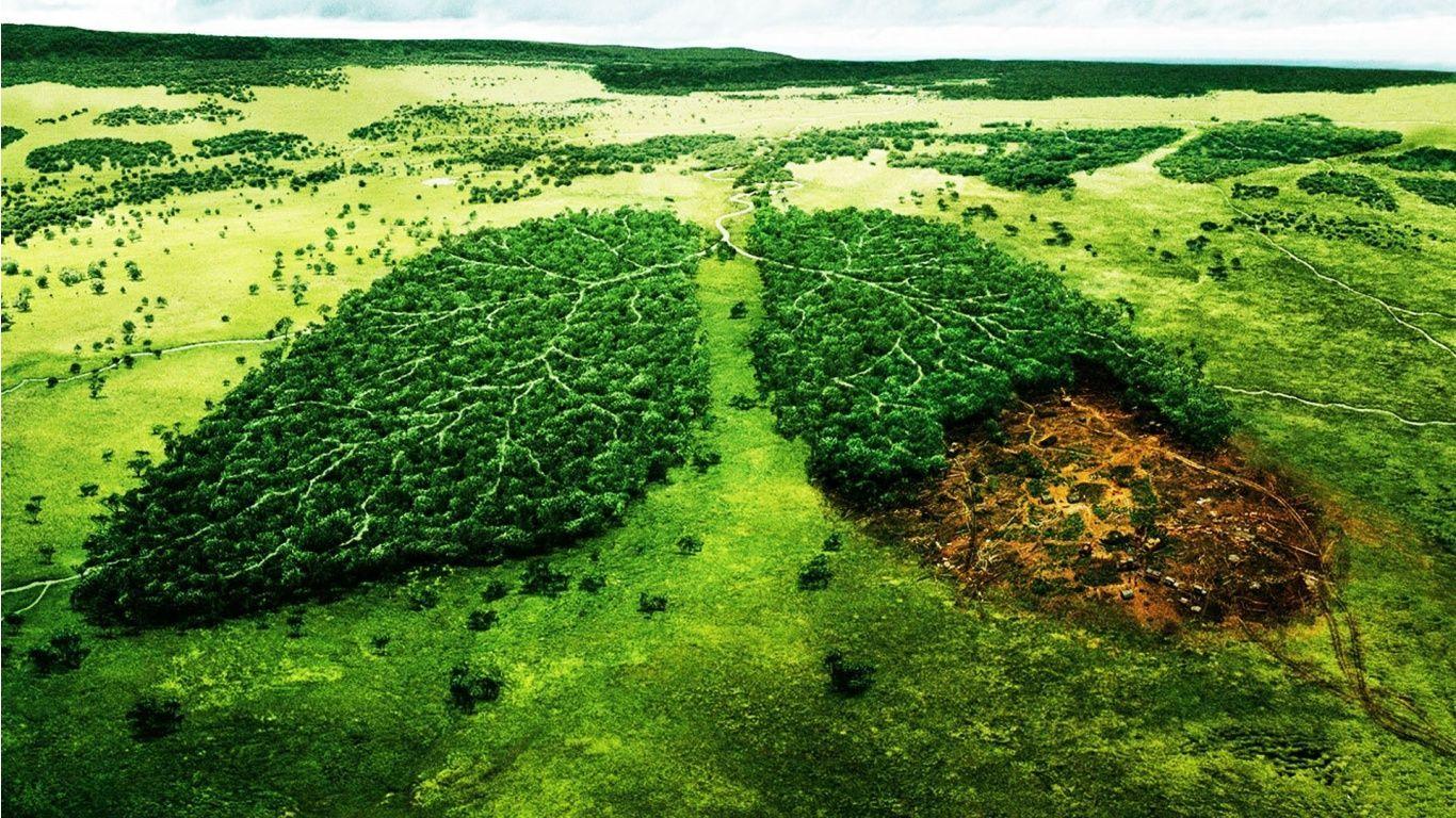 ¿Estás de acuerdo en que debemos proteger el medio ambiente?