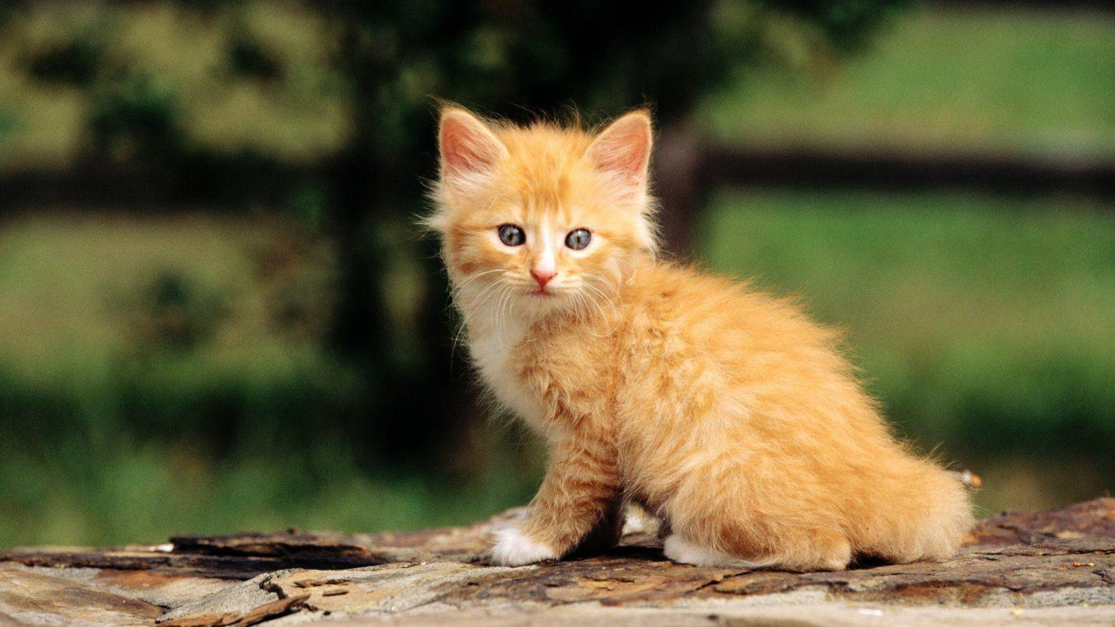 Te encuentras por la calle un gatito abandonado y nadie da señales de que sea suyo. ¿Cómo reaccionas?