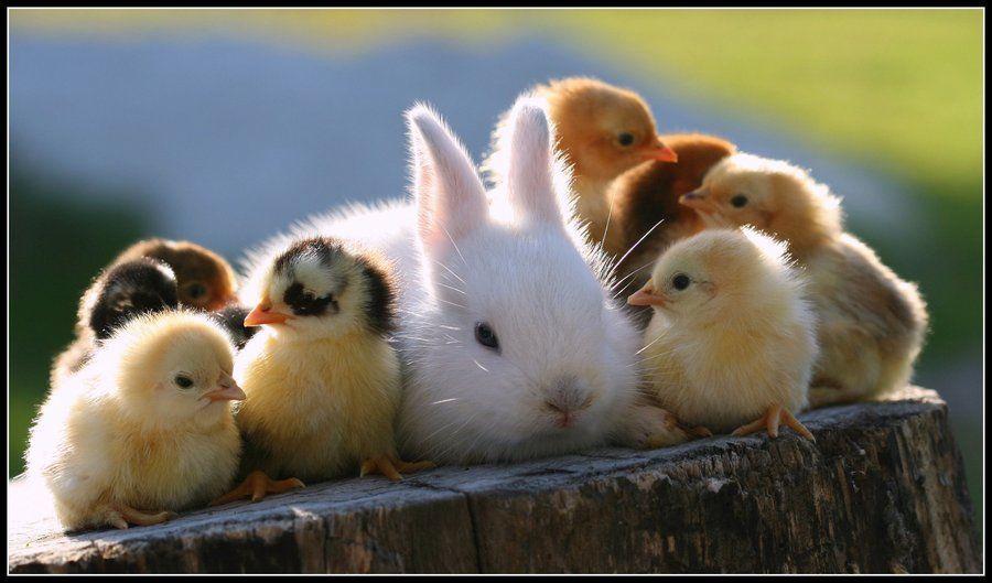 ¿Qué animal te gusta más?