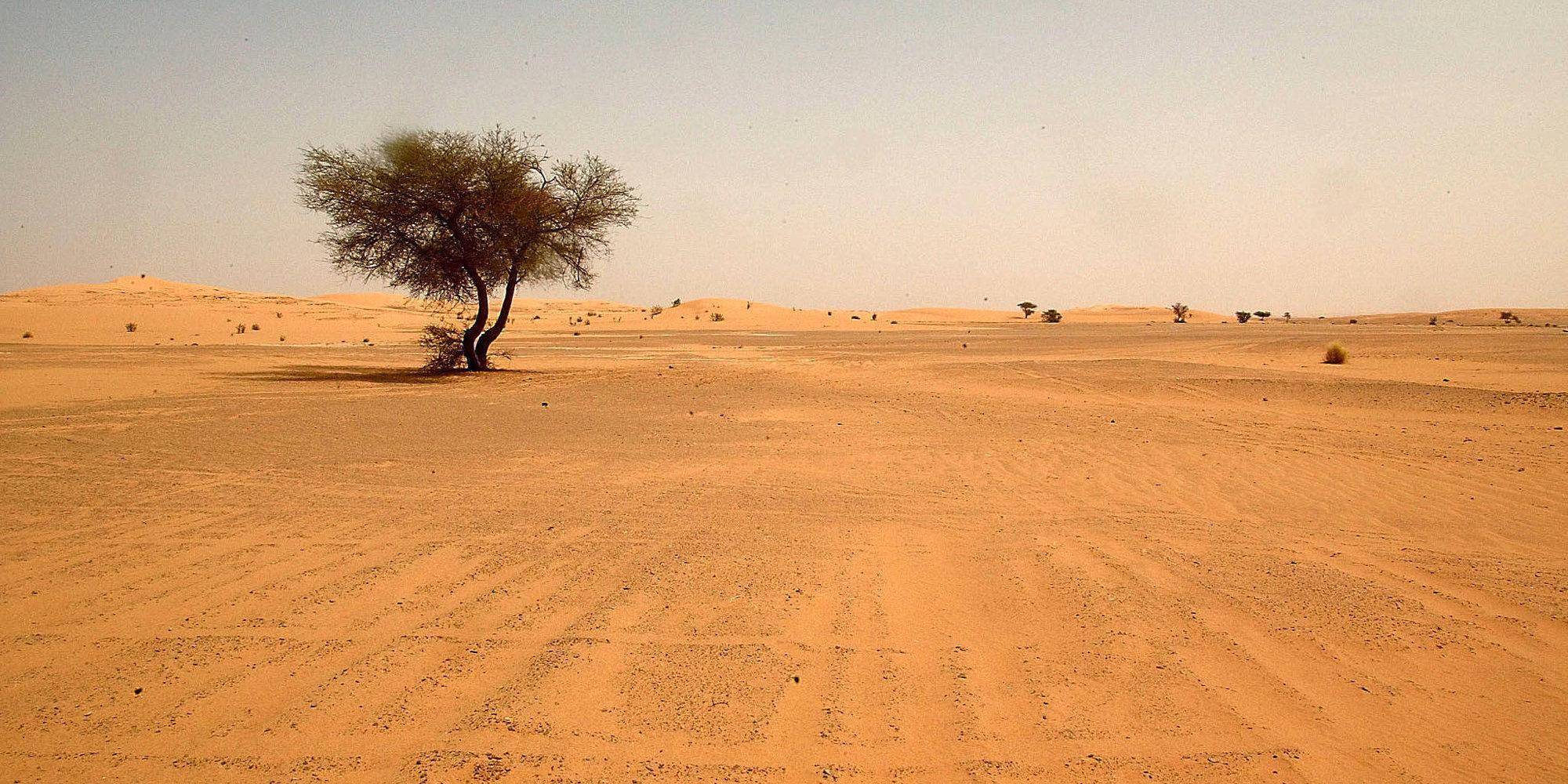 A falta de agua, están los lugares secos, ¿cuál es el lugar más seco de la Tierra?