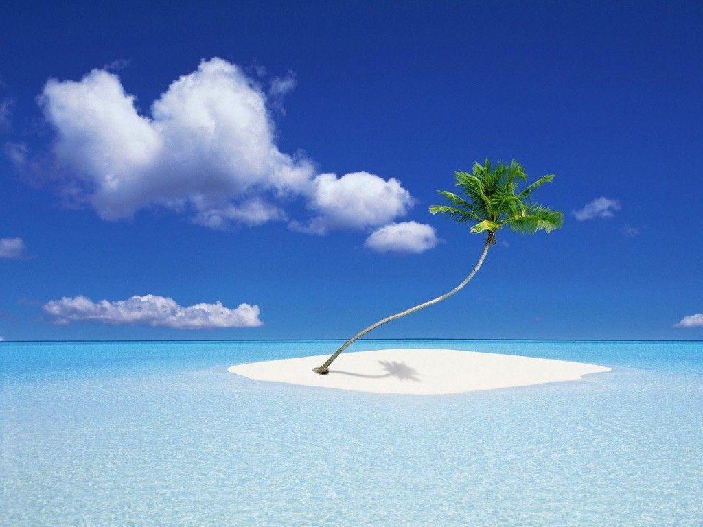 Naufragas y estás en una isla desierta perdido en el mar con tu hipotético perro/gato. ¿Qué haces?