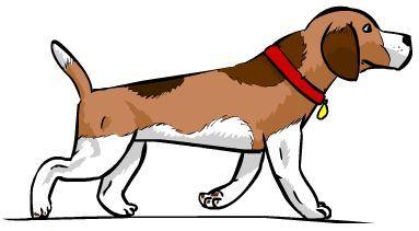 Ahora, ¿matarías a un perro que te está molestando?