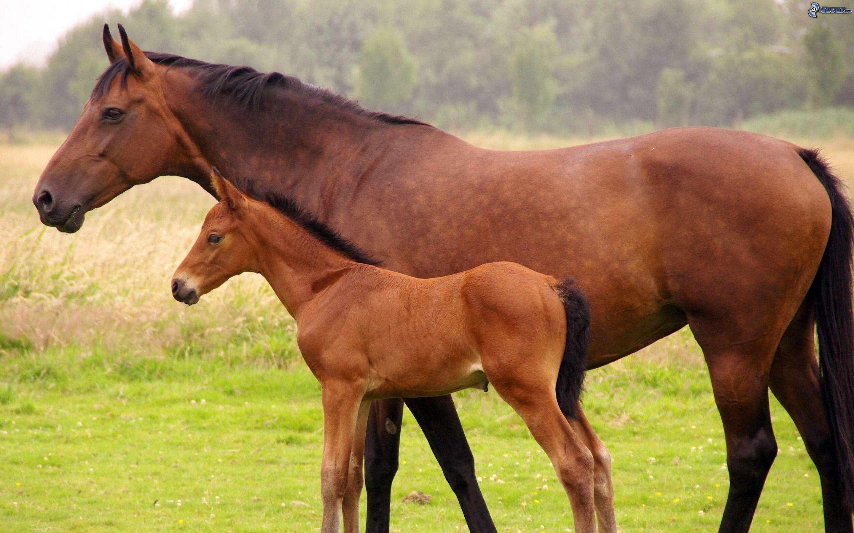 Hay un país con más caballos que habitantes. ¿De qué país estamos hablando?