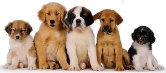 2974 - ¿Puedes reconocer estas razas de perro?