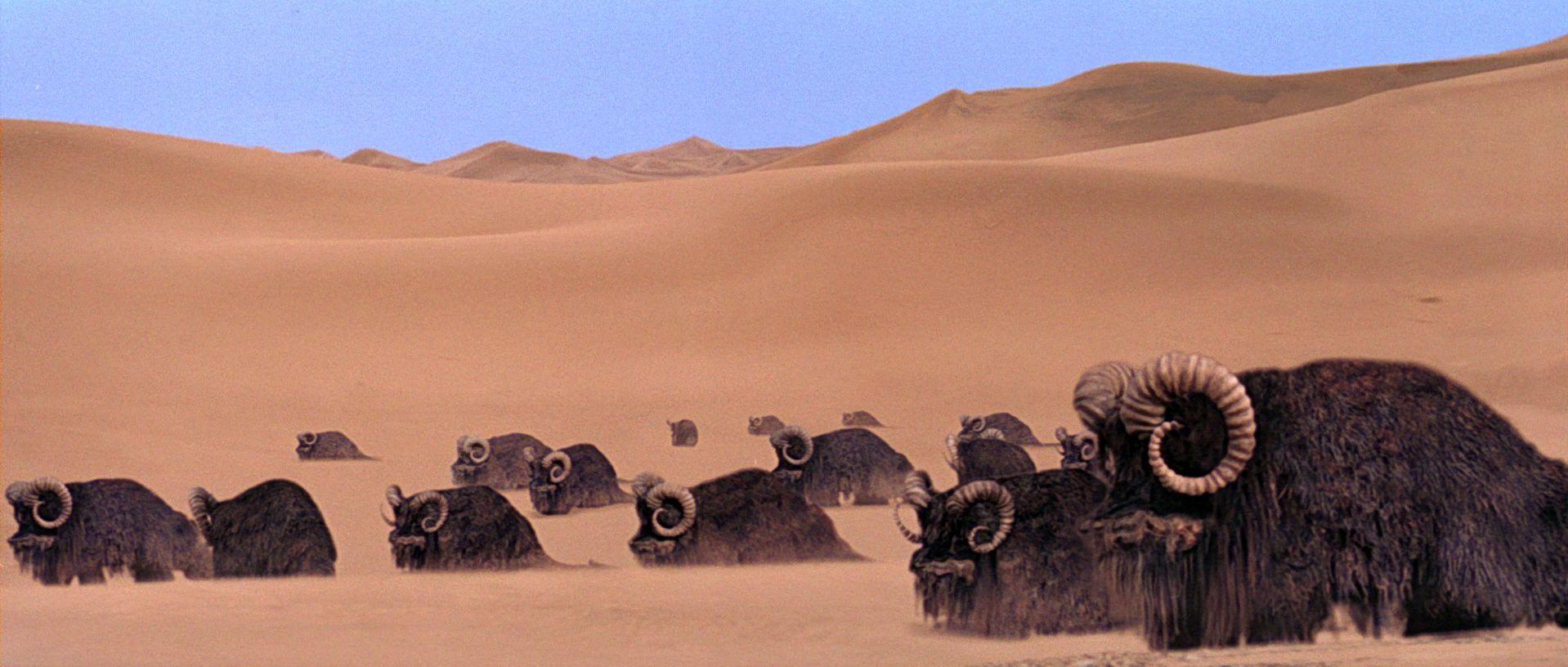 3456 - ¿Cuánto sabes de las criaturas de Star Wars?