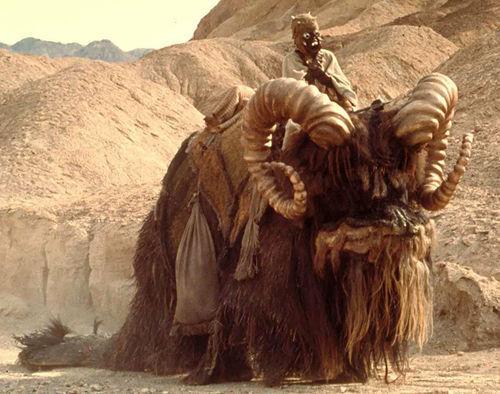 ¿Cómo se llaman estas criaturas que sirven de transporte por el desierto de Tatooine a los Moradores de las arenas?
