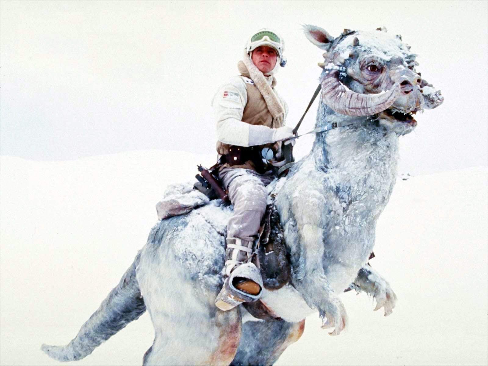 Pasemos del desierto cálido al helado. ¿Sabrías decirme el nombre de este emblemático animal?