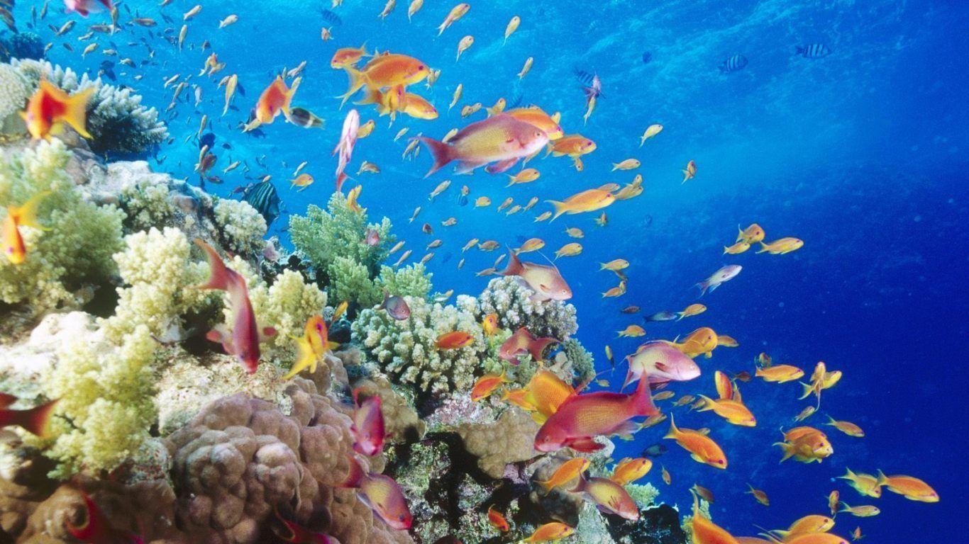4033 - ¿Con qué clase de pez te identificas?