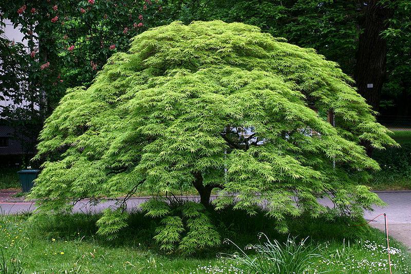 4289 - ¿Qué arbusto fuiste en otra vida?