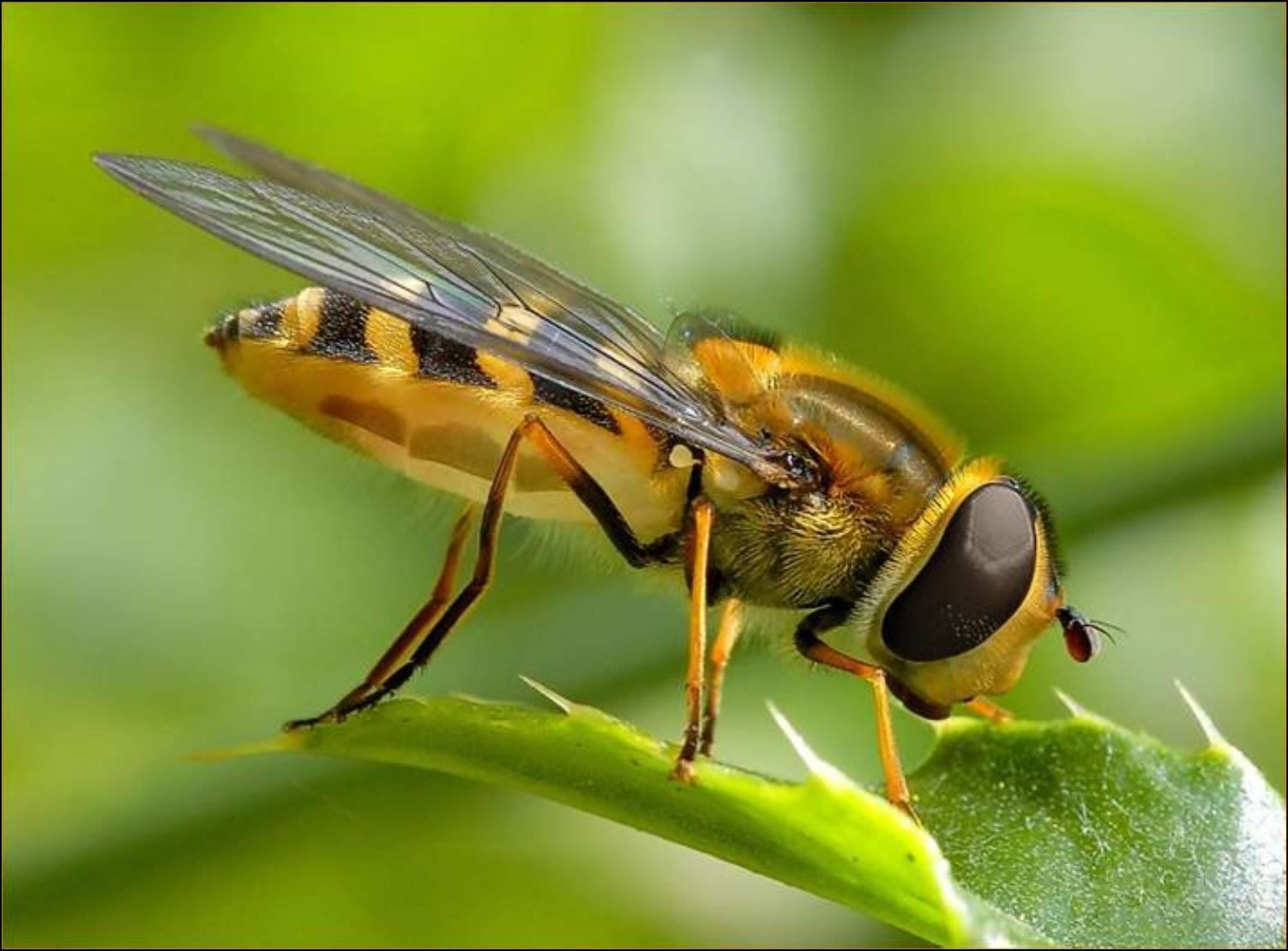 4324 - ¿Serías capaz de relacionar estos insectos con su respectivo orden?