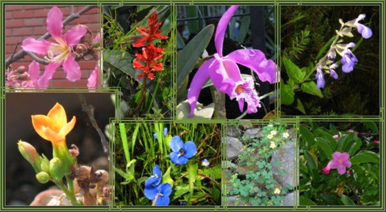4489 - ¿Cómo llevas la botánica?