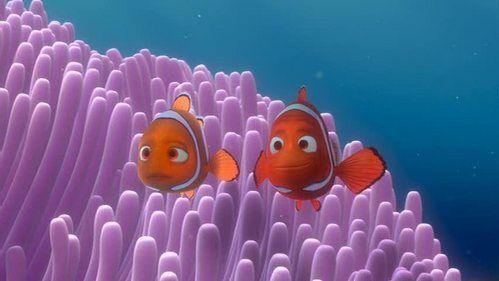 ¿Qué mató a la madre de Nemo?