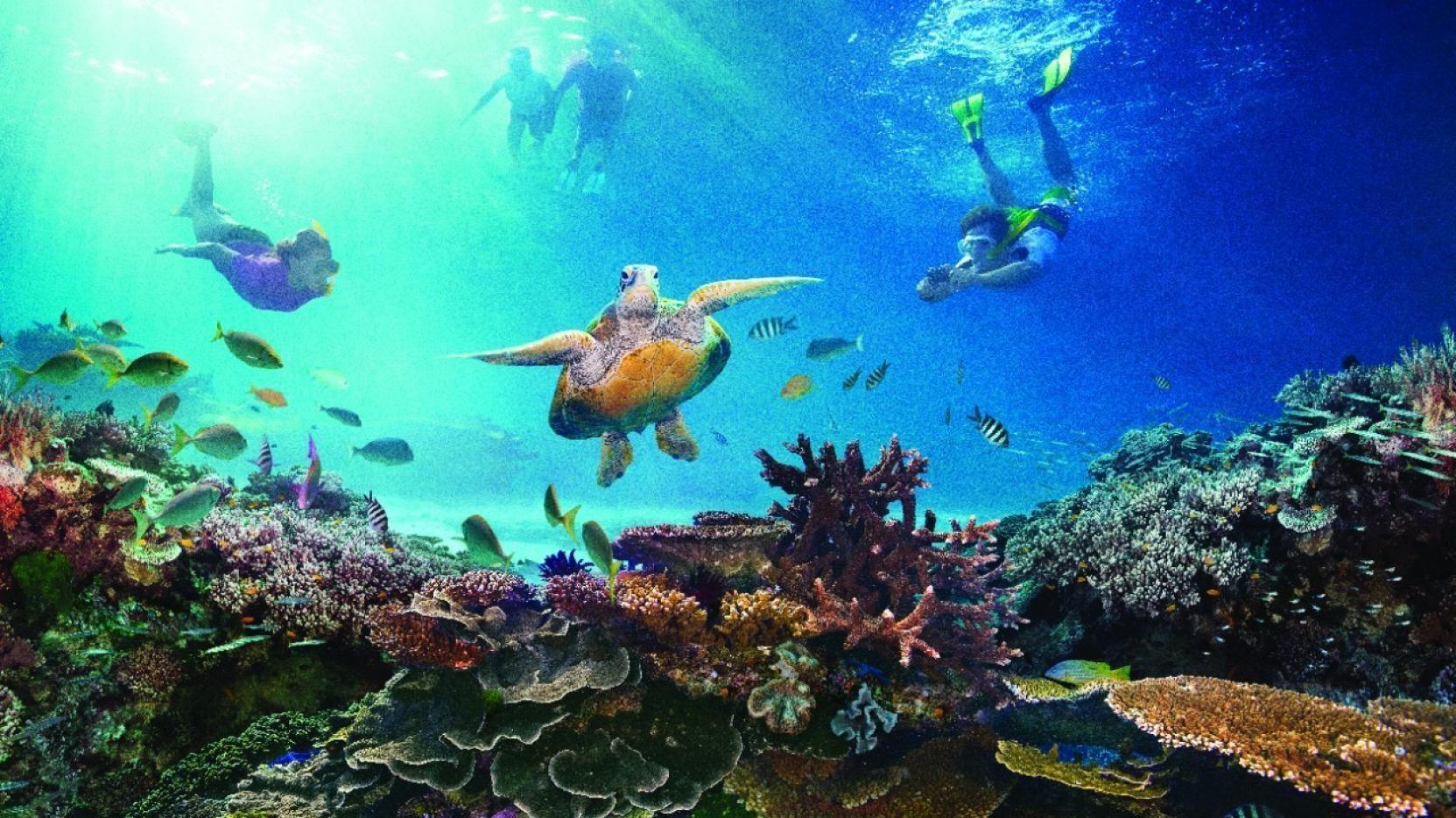 ¿Junto a qué estado se encuentra la Gran barrera de coral australiana?