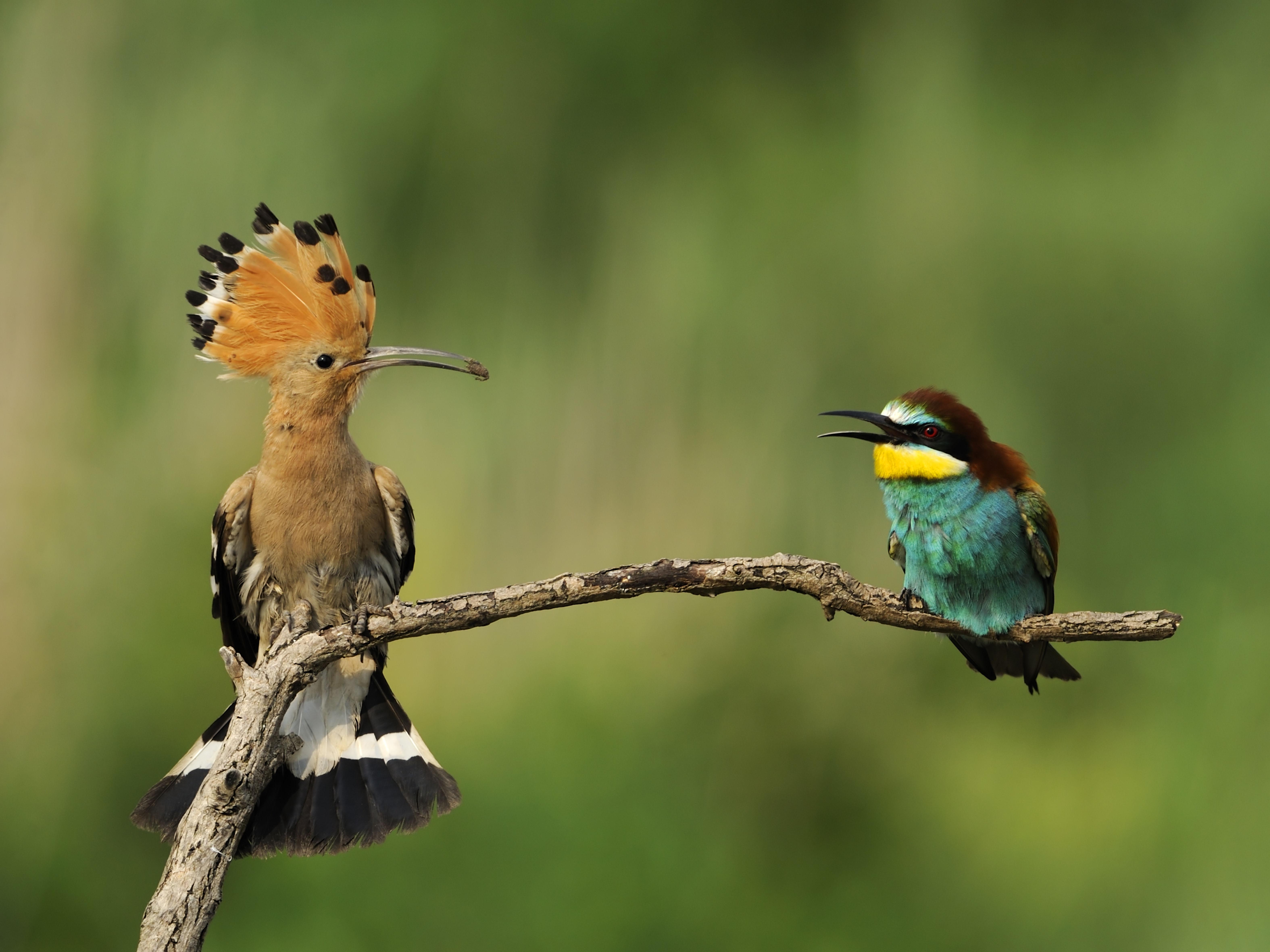 4907 - Aves de la Península Ibérica