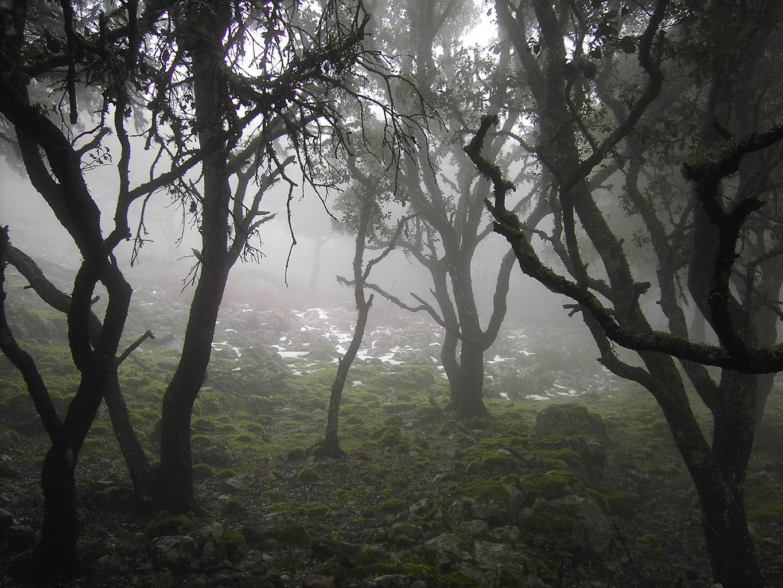 Te has perdido en un bosque, ¿Qué va a ser de ti?