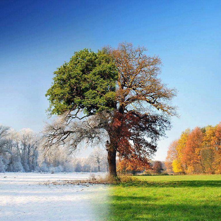 ¿En qué tipo de clima y ambiente te sientes más cómodo?