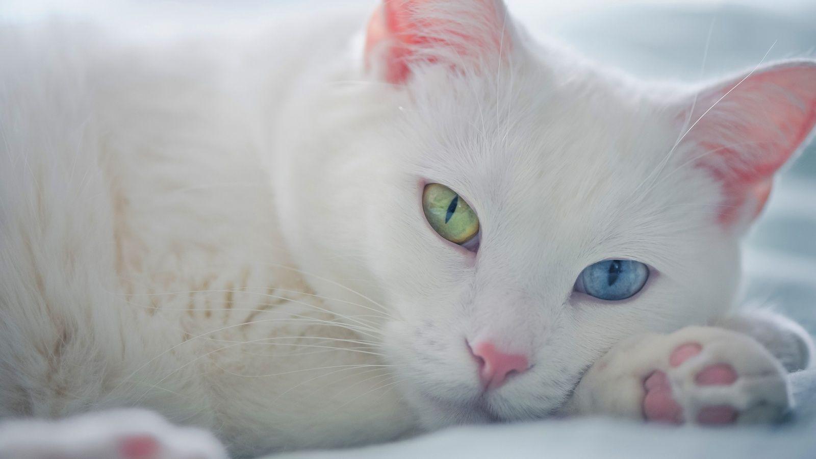 Empecemos desde los inicios... ¿De qué especie proviene el gato?