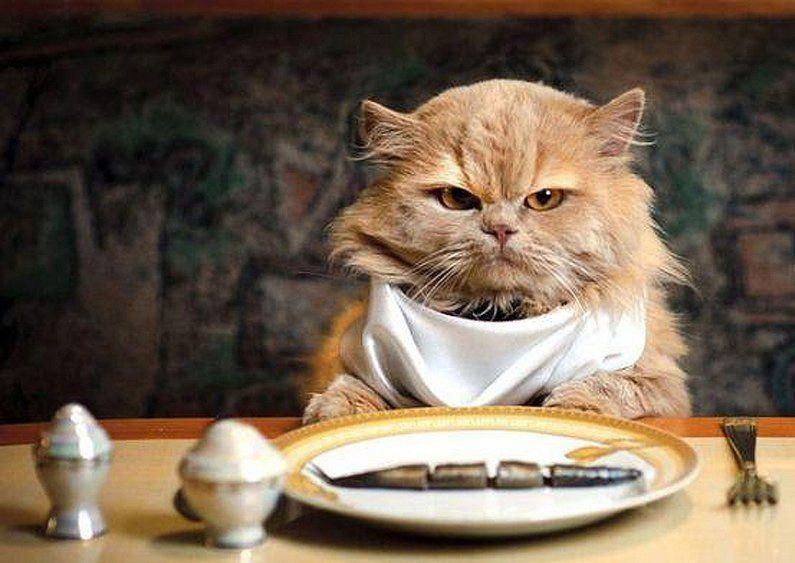 ¿Tienes que educar a tu gato a comer de todo?