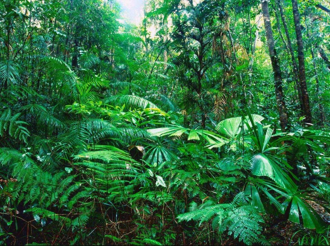 Te has adentrado en la selva por una razón u otra. Escuchas sonidos de animales no muy lejos de ti, parecen grandes...