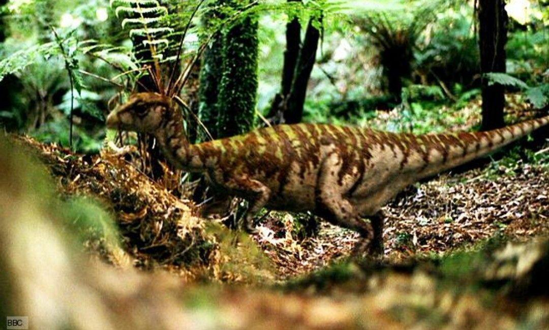 En la otra orilla del río, ves un grupo de pequeños dinosaurios. No parecen peligrosos y no te han visto