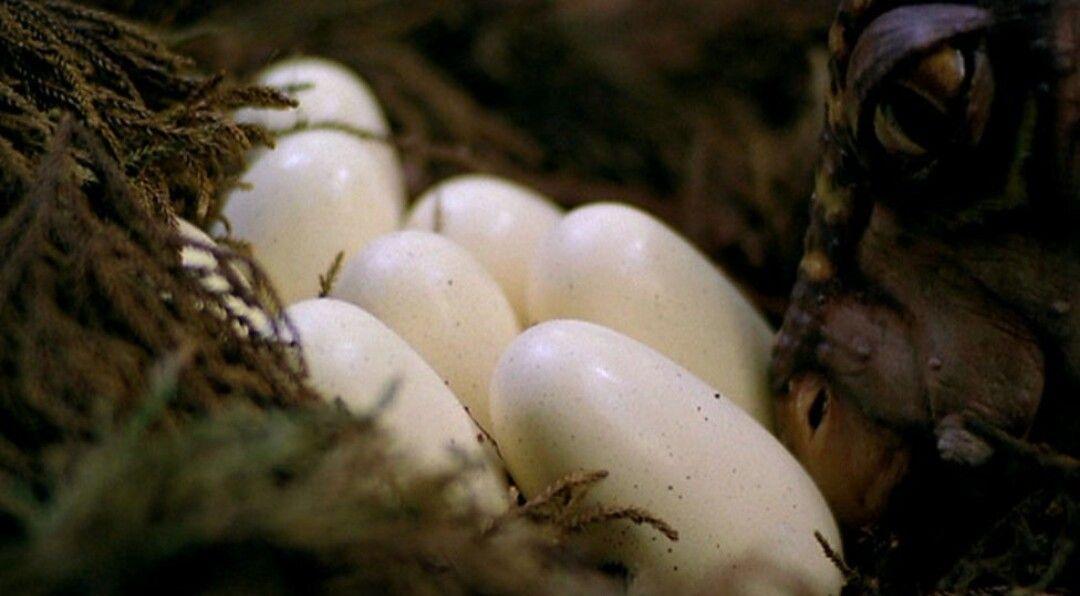 Te das cuenta de que tienen vigilado un nido con huevos y tú tienes hambre. ¿Qué piensas?