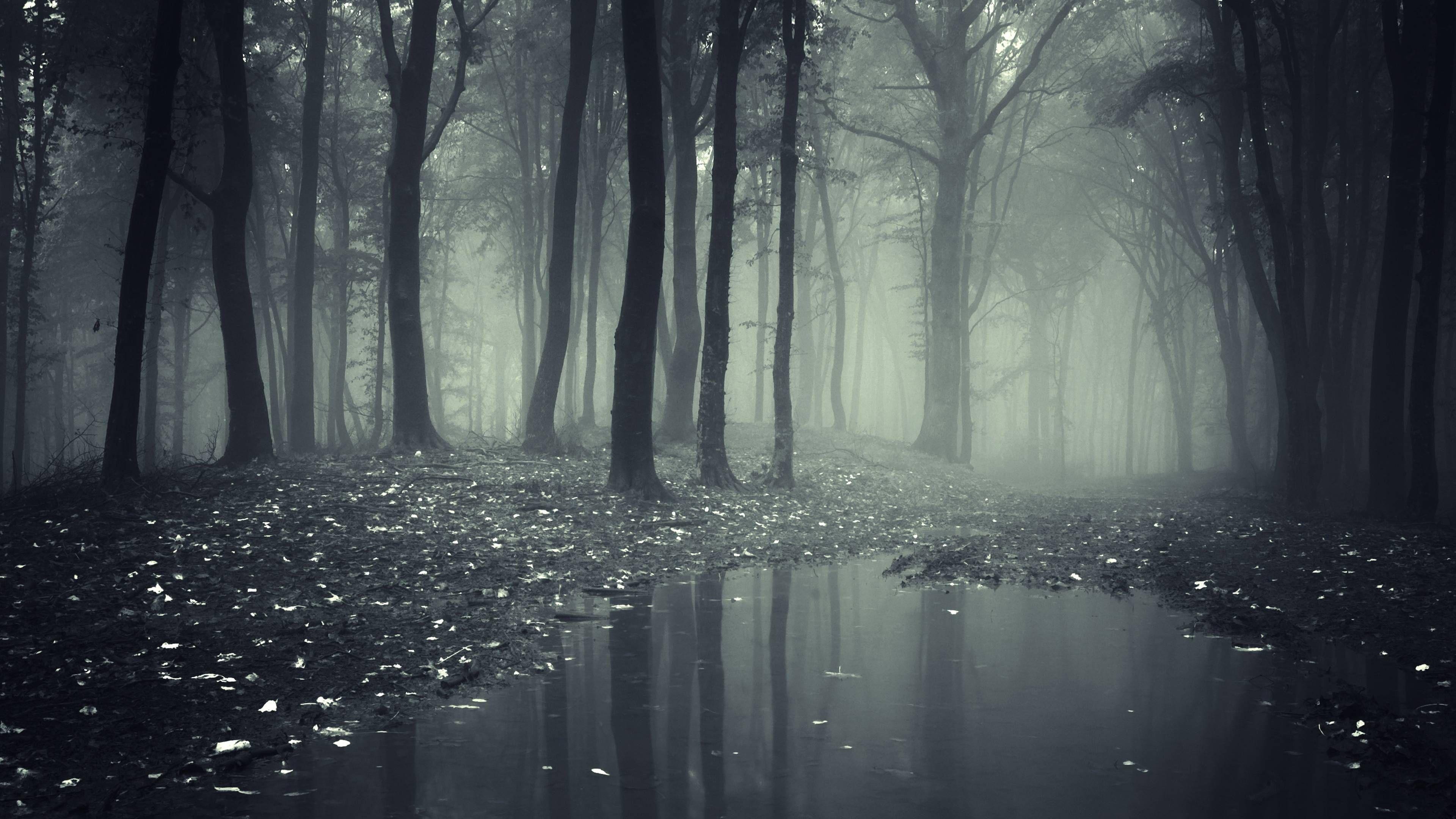 5062 - La aventura en el Bosque Oscuro. ¿Cuál sería tu destino?