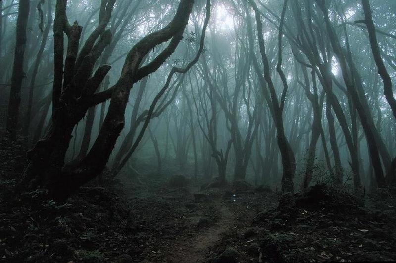 Al poco de llegar al bosque anochece. Tu compañero/a te recomienda echarse a dormir. ¿Sigues el consejo?