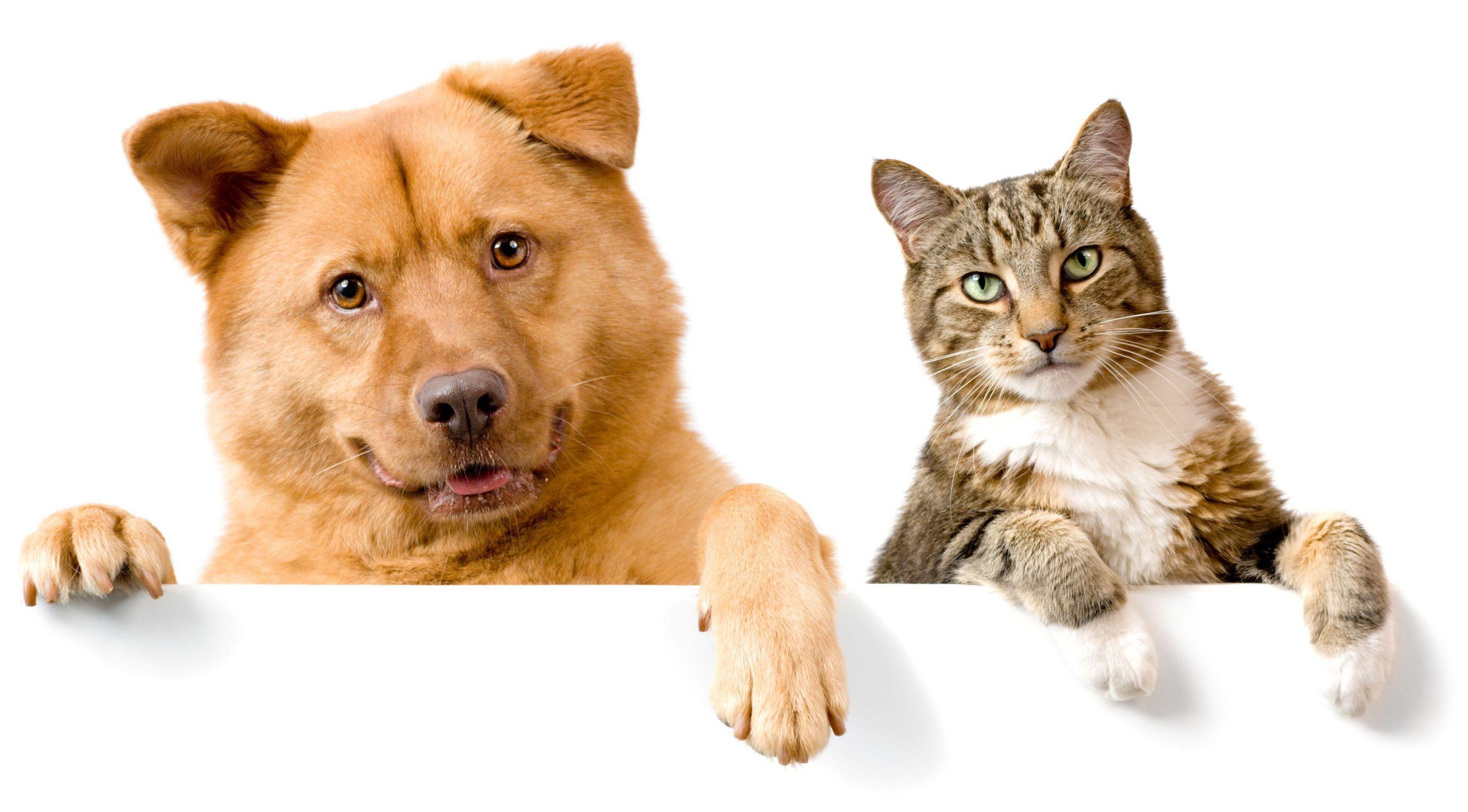 ¿Qué mascota prefieres?