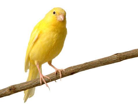 Y ya la última... ¿Qué animal es el predominante en la isla de Fuerteventura?