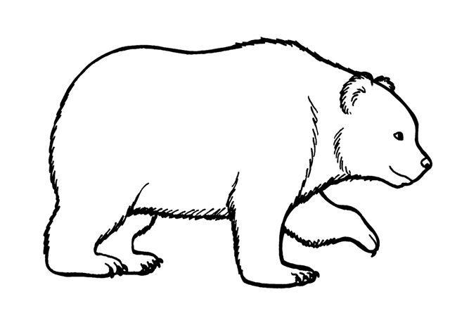 Un oso camina 10 km hacia el sur, 10 hacia el este y 10 hacia el norte, volviendo al punto del qué partió. ¿De qué color es?