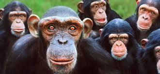 Si hay diez monos metidos en una caja ¿Cuántos hay afuera?