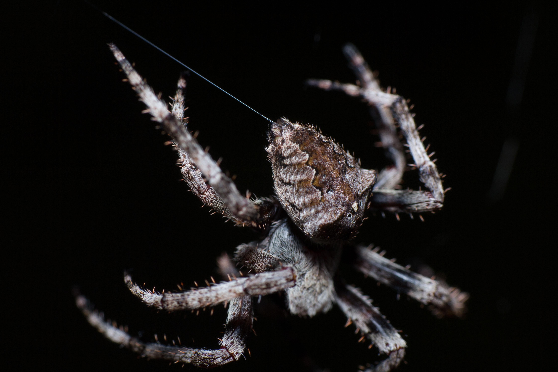 En igual grosor, ¿qué es más resistente, la tela de araña o el acero?