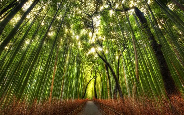 Después de coger un cuchillo del árbol, te vas del lago y encuentras un bosque. Decide si ir por el camino o campo a través: