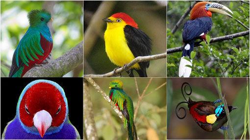 6715 - Aves del mundo