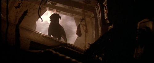 ¿En la versión extendida, qué animal es infectado por el abrazacaras en vez del perro de la versión de cine?