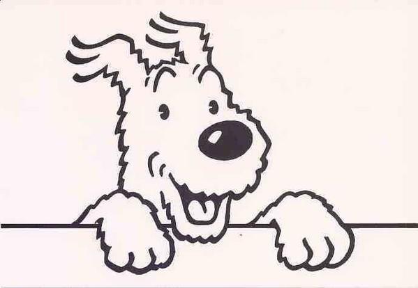 ¿Cómo se llama el perro que acompaña a Tintín en  todas sus aventuras?