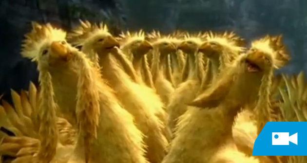 ¿En qué Final Fantasy apareció el Chocobo por primera vez?