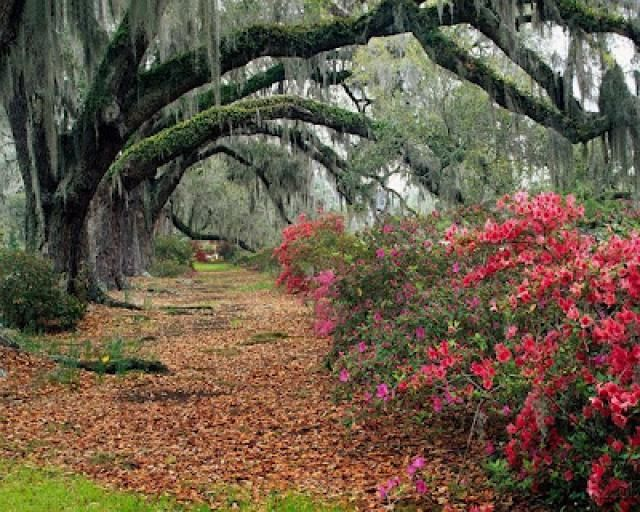El bosque de Sherwood.