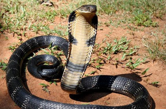 7743 - ¿Qué tipo de serpiente eres según tu personalidad?